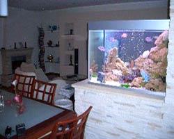 Аквариумы часто устанавливают в мало освещенных секторах комнаты, чтобы оживить пространство, добавить красок и жизни