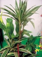 Основной акцент в композиции делается на красивые цветущие растения