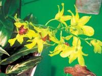 Для большей выразительности композиции цветы лучше подобрать в разной гамме