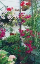 Выращивать цветы очень просто — как говорят англичане, легко, как раз, два, три