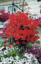 В центре, как правило, сажается цветок повыше, чтобы получился каскад